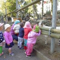 Ausflug in den Ziegenpark mit unseren Kleinsten